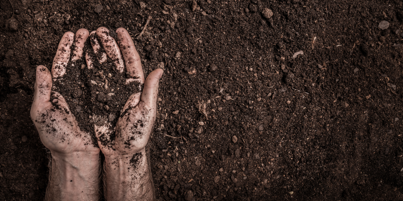 Are Your Crops Getting Their 'Dietary Supplements' from the Soil?