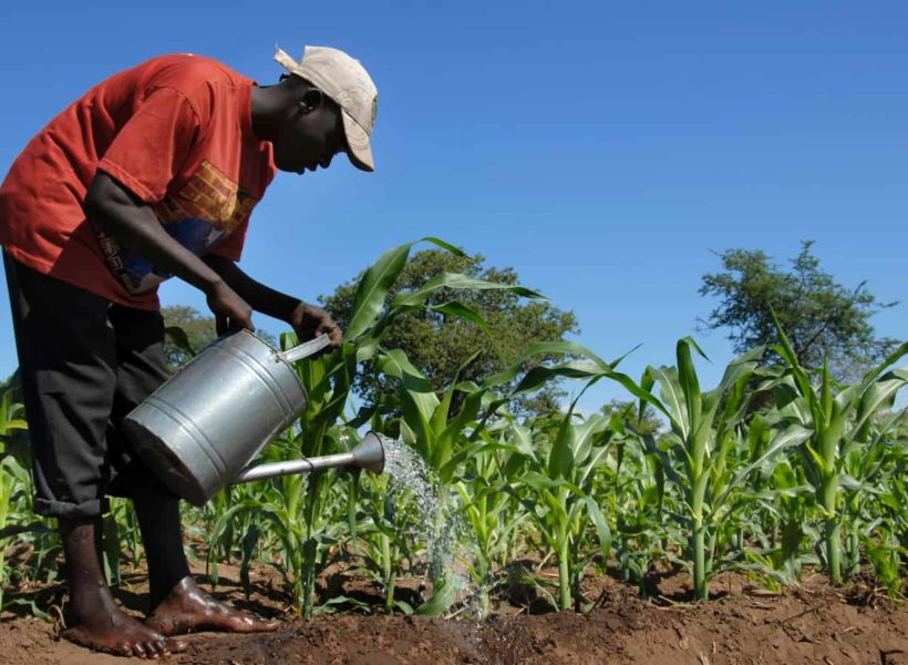 Solving Africa's Soil Depletion and Starvation Through Sustainable Farming