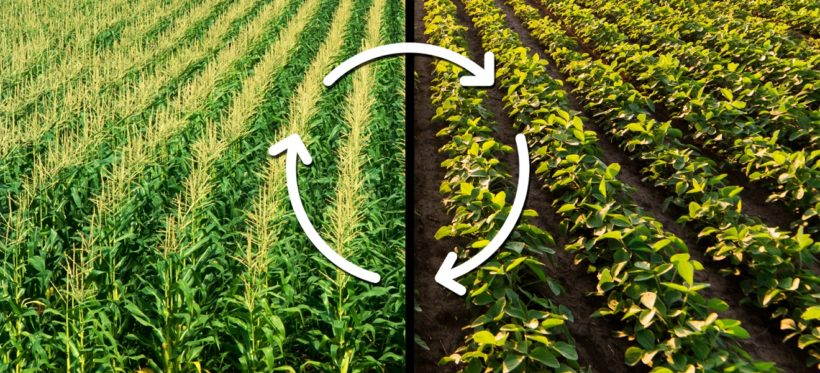 Crop Diversity: A 'Win-Win' For Incomes and Ecology